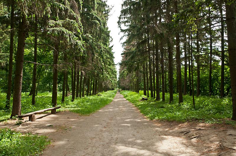 Краснокутський дендропарк ⎼ Харківщина.